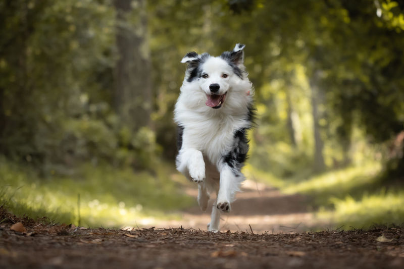 off-leash-reliable