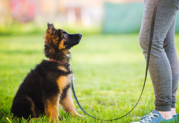 puppy-train