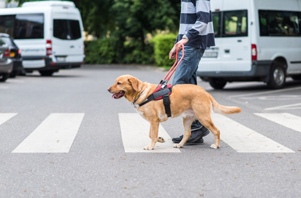 service-dog-training