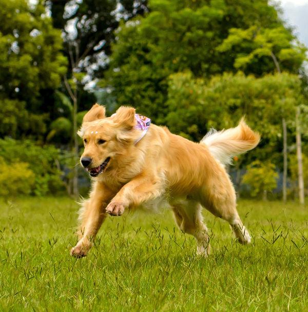 freedomk9-dog-running